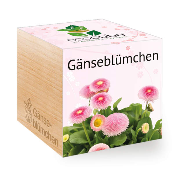 "Ecocube Pflanze im Holzwürfel ""Gänseblümchen"""