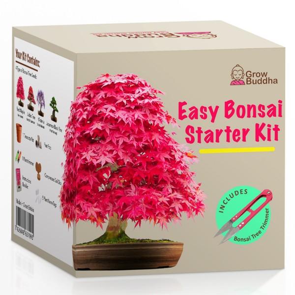 Bonsai Aufzucht - Starter Kit