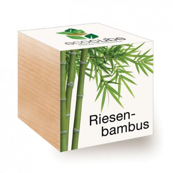 "Ecocube Pflanze im Holzwürfel ""Riesenbambus"""