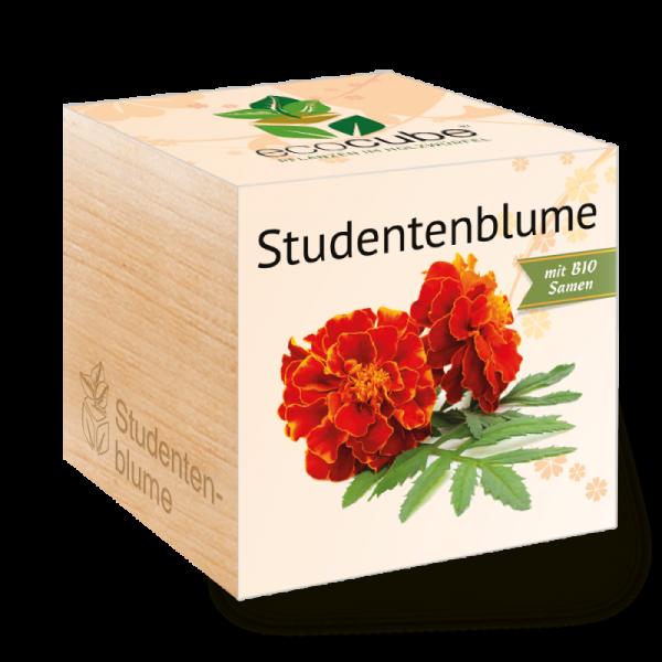 "Ecocube Pflanze im Holzwürfel ""Studentenblume"""