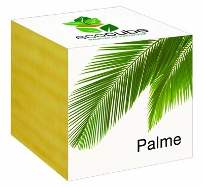 """Ecocube Pflanze im Holzwürfel """"Palme"""""""